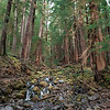 Mystic Forrest: Sol Duc